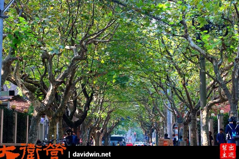 上海桃江路綠色隧道