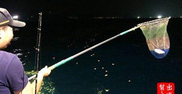 可愛的河豚入網!而且撈起來的時候晃一晃魚網,它就會整個膨脹起來