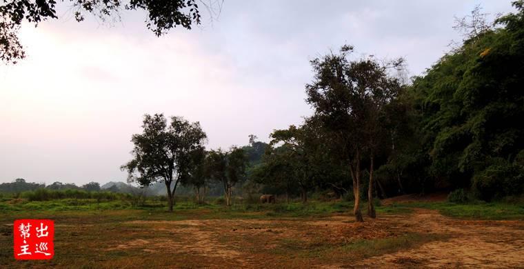 酒店的外圍一大片無邊際的天然環境,這裡有約莫25隻大象自由的生活著