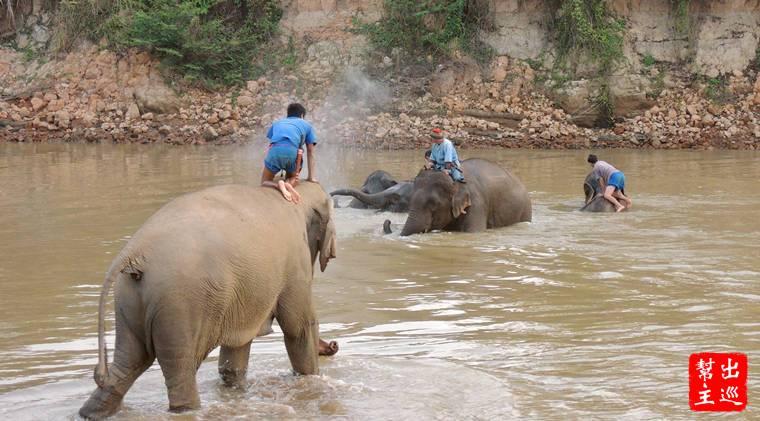 訓練師會先帶大象去洗澡