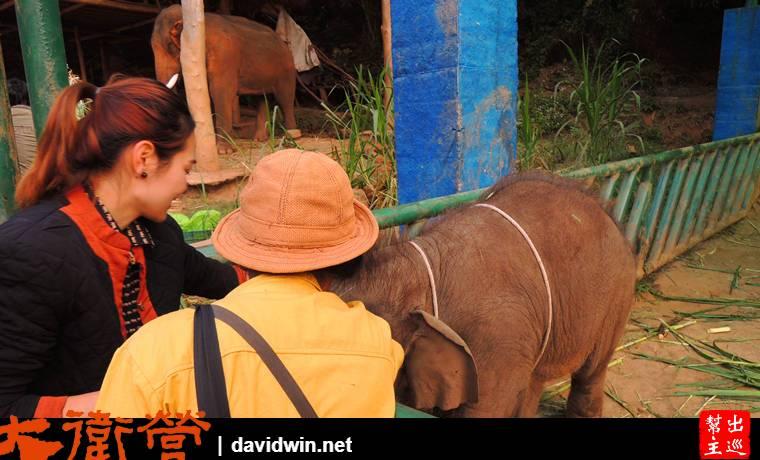 Anantara Golden Triangle Elephant Camp & Resort的服務與大象保育