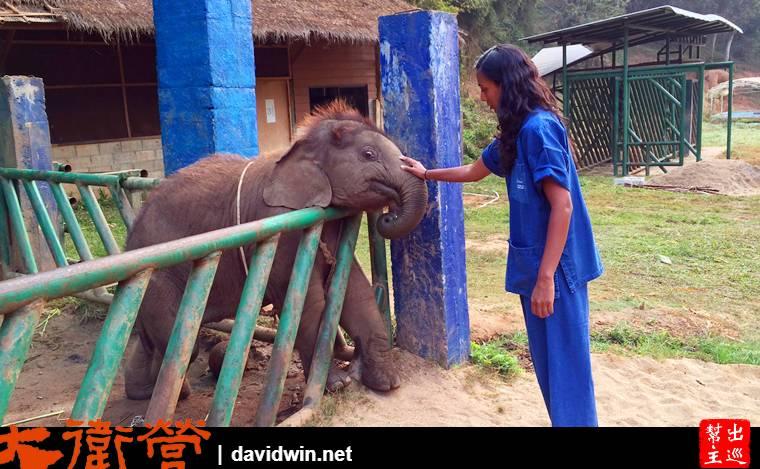【金三角】Anantara Golden Triangle Elephant Camp & Resort的服務與大象保育