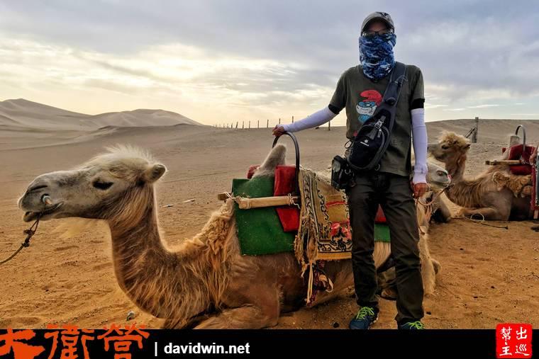 敦煌沙漠騎駱駝