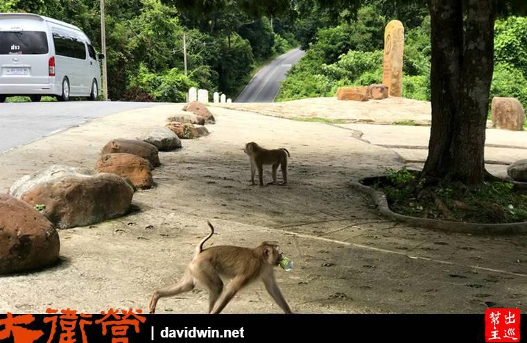 考艾國家公園內的野生猴子