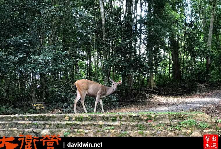 考艾國家公園遊客服務中心外的野生鹿
