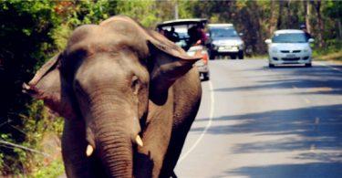 考艾國家公園大象出沒