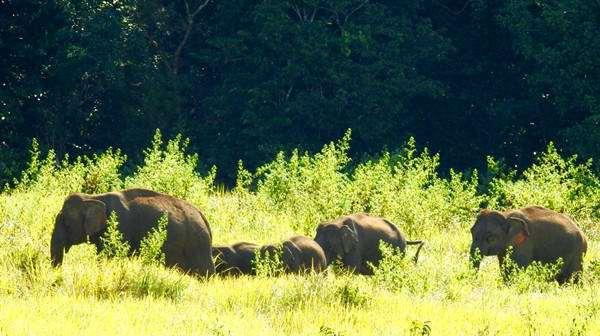 考艾國家公園內有大象出沒