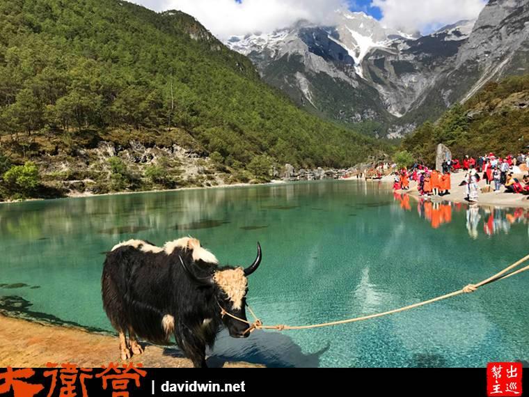 突然看到前方有牦牛
