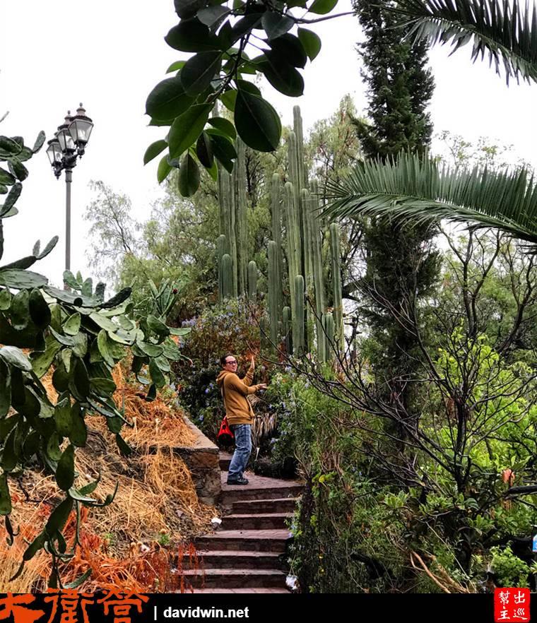 彩色山城瓜納華托Guanajuato巨大仙人掌