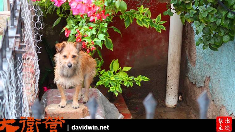 彩色山城瓜納華托Guanajuato可愛的狗狗