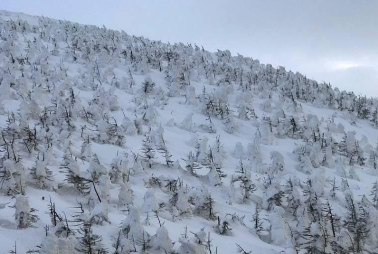 樹冰又被稱為是『ICE MONSTER』(冰雪怪物),其實真正的名稱應該是『霧淞』