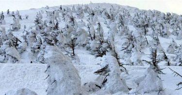 【日本|山形】滑雪、泡湯、樹冰一次滿足:藏王