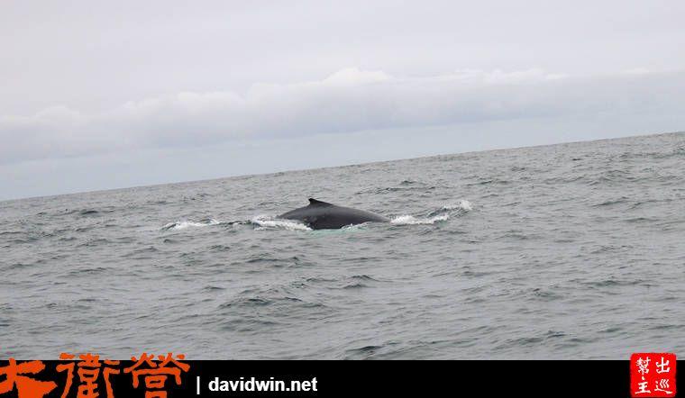 請大家注意左手邊,11點鐘方向,有海豚出沒