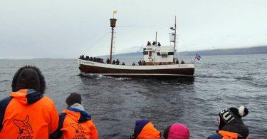 隔壁別家的賞鯨船,同樣沒有什麼收穫,船長之間也需要互通有無