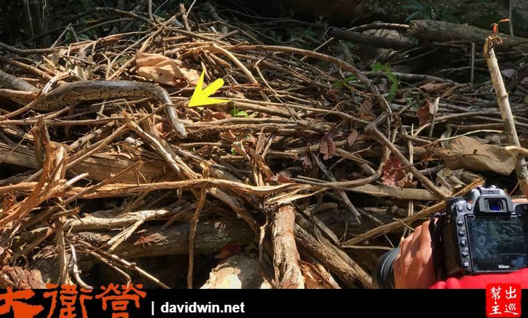 考艾國家公園看見蛇