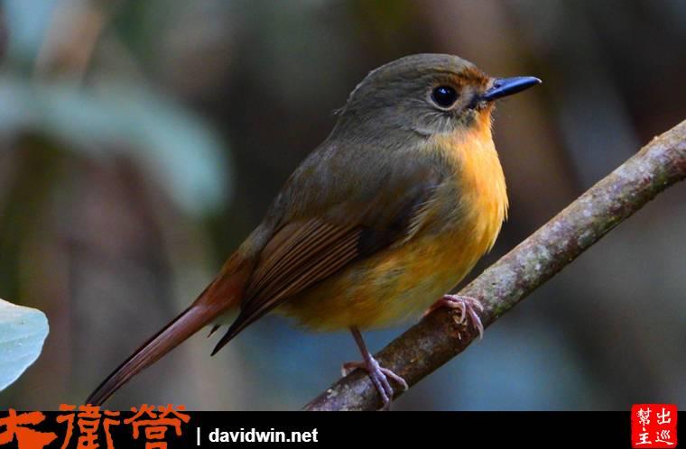 考艾國家公園內的野生鳥類