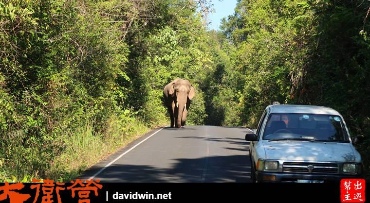 考艾國家公園遇到野生大象